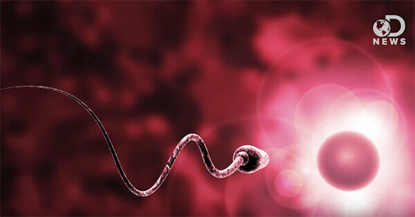 An animation of a single sperm.
