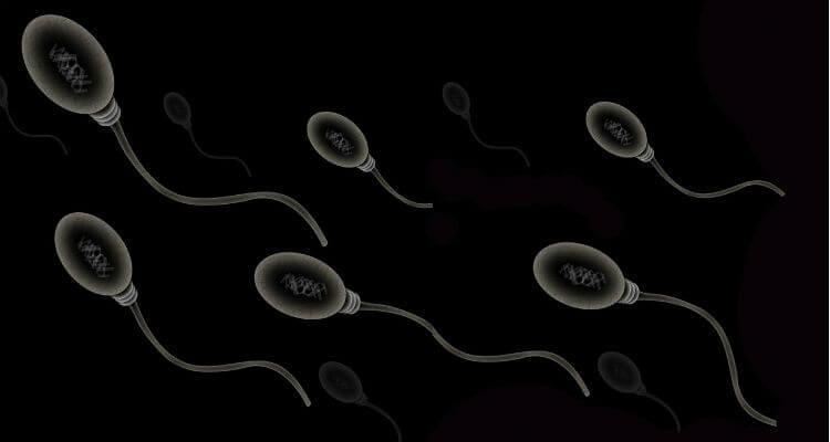 How Sperm Works